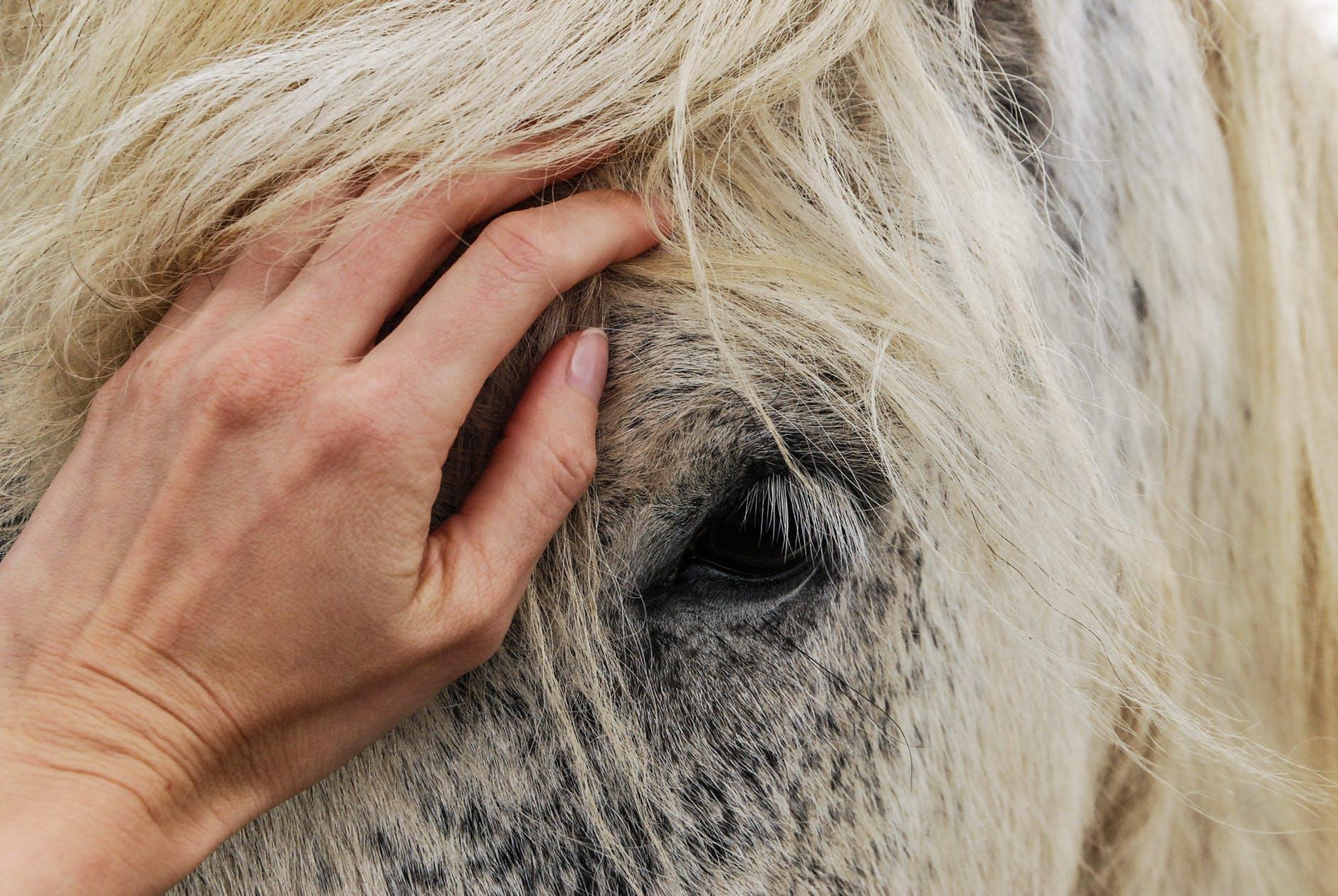 En hand på en hästmule