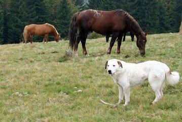 Horses And Dog 1381153.jpg