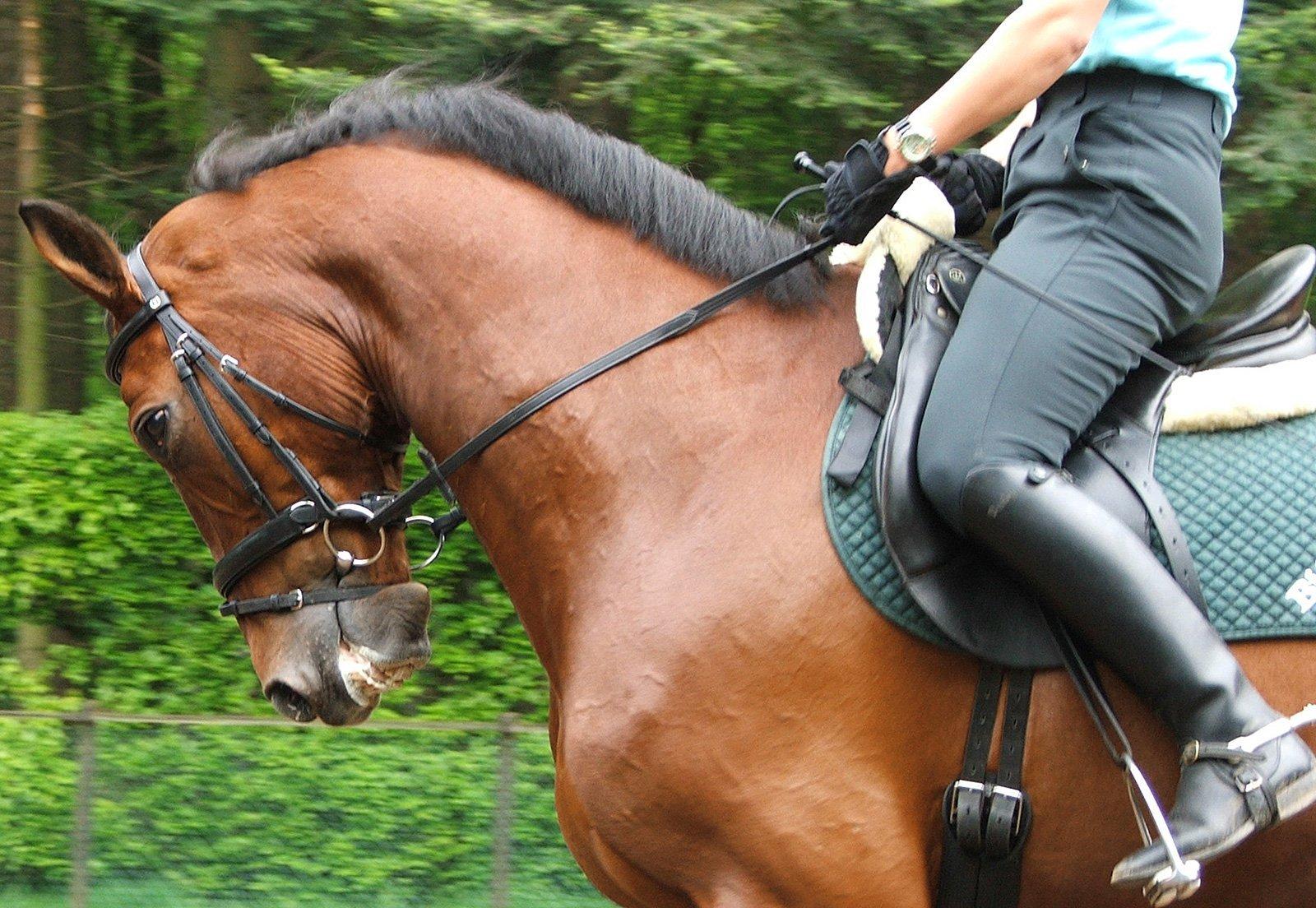 Att Driva Företag Inom Hästnäringen