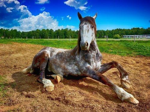 Ska Du Köpa Nytt Eller Begagnat Till Dig Och Din Häst?